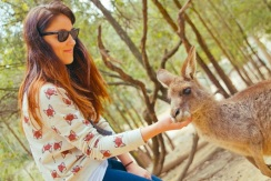 australia_qld_currumbin-wildlife-park_0006 (1)
